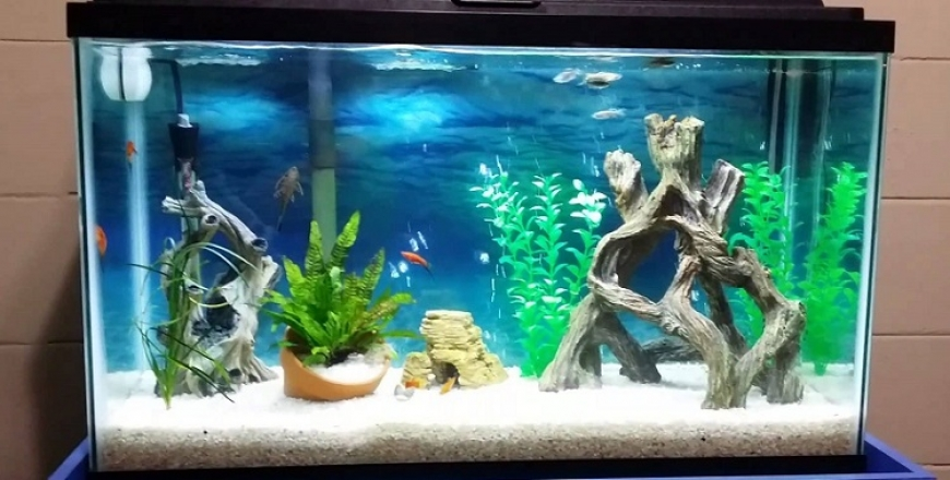 Best gallon fish tank aquarium 5 10 100 20 200 30 for Best way to clean a fish tank